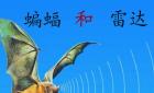 【《蝙蝠和雷达》ppt】《蝙蝠和雷达》的教案设计